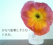 PAP_0158.JPG